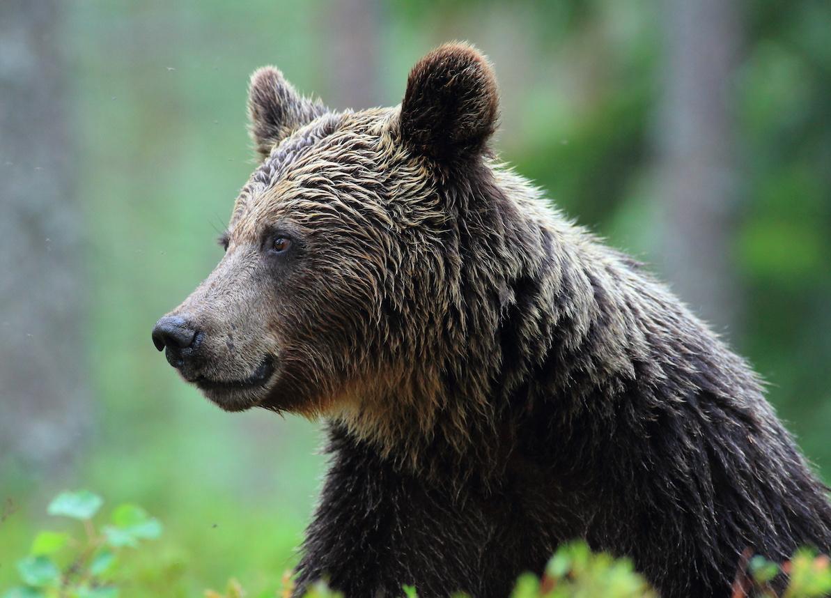 mercato orso più lungo crypto